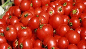 كيفية الوقاية من أضرار الطماطم