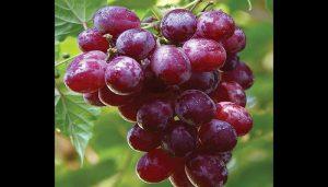 أضرار العنب
