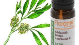 فوائد زيت شجرة الشاي للفطريات