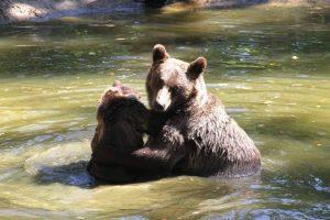 محمية الدببة