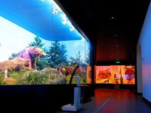 متحف التاريخ الطبيعي جريجور أنتيبا