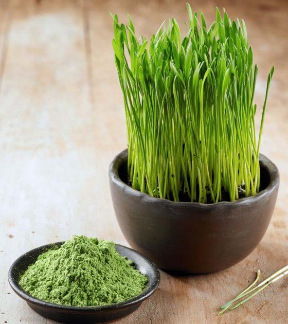 فوائد عشبة القمح للبشرة