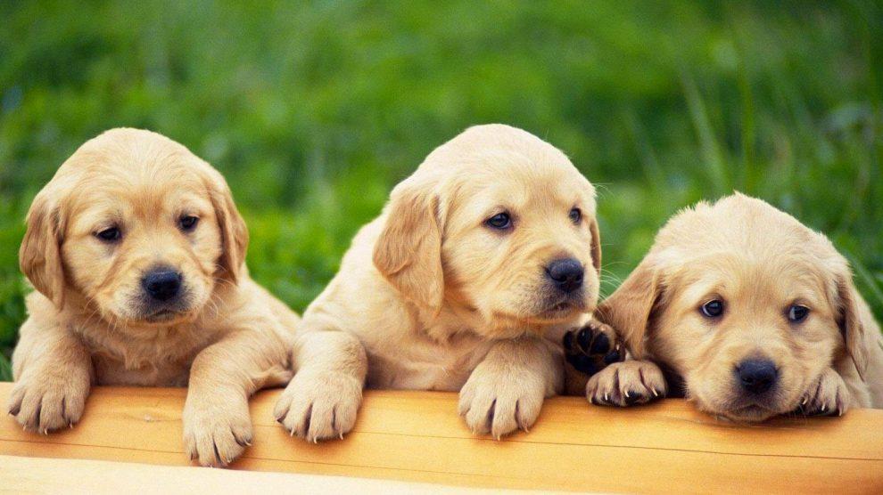 أحاديث عن الكلاب