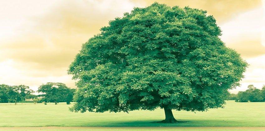 احاديث نبوية عن الشجرة
