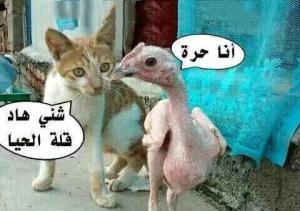 صور مغربية مضحكة