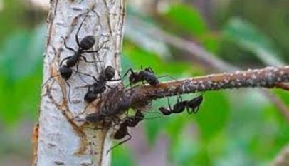 طرق التخلص من النمل في الحديقة