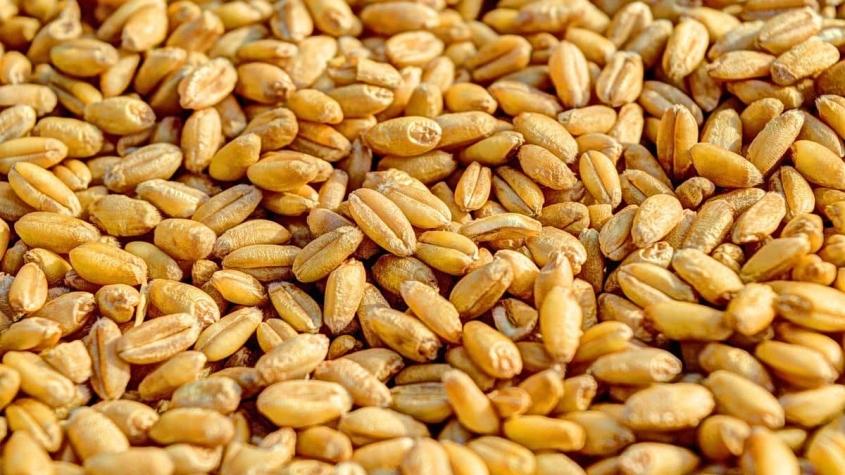 هل القمح مفيد لمرضى السكري