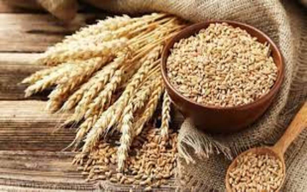 ما الفرق بين انواع الشعير والقمح