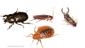 كيفية التخلص من حشرات الرطوبة