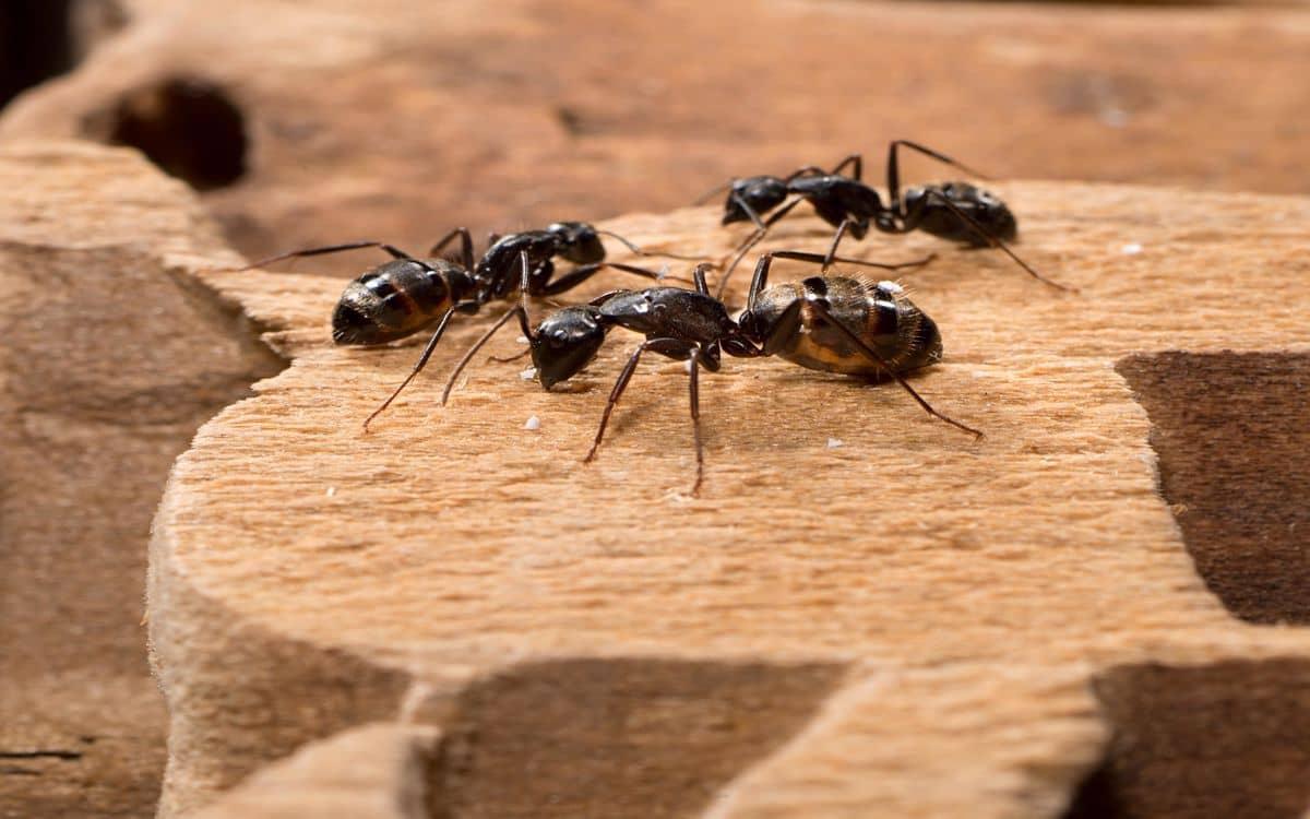 كيفية التخلص من النمل في التربة