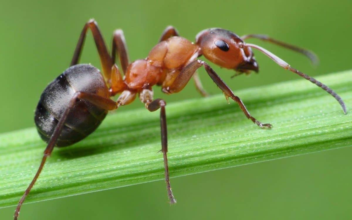 كيفية التخلص من النمل دون قتله