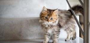 كيفية التخلص من براز القطط على السلم