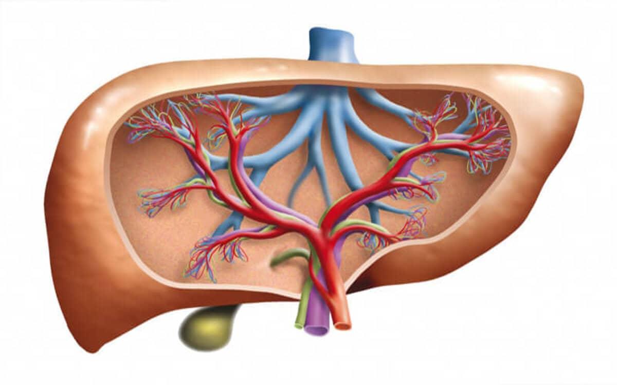 كيفية التخلص من دهون الكبد