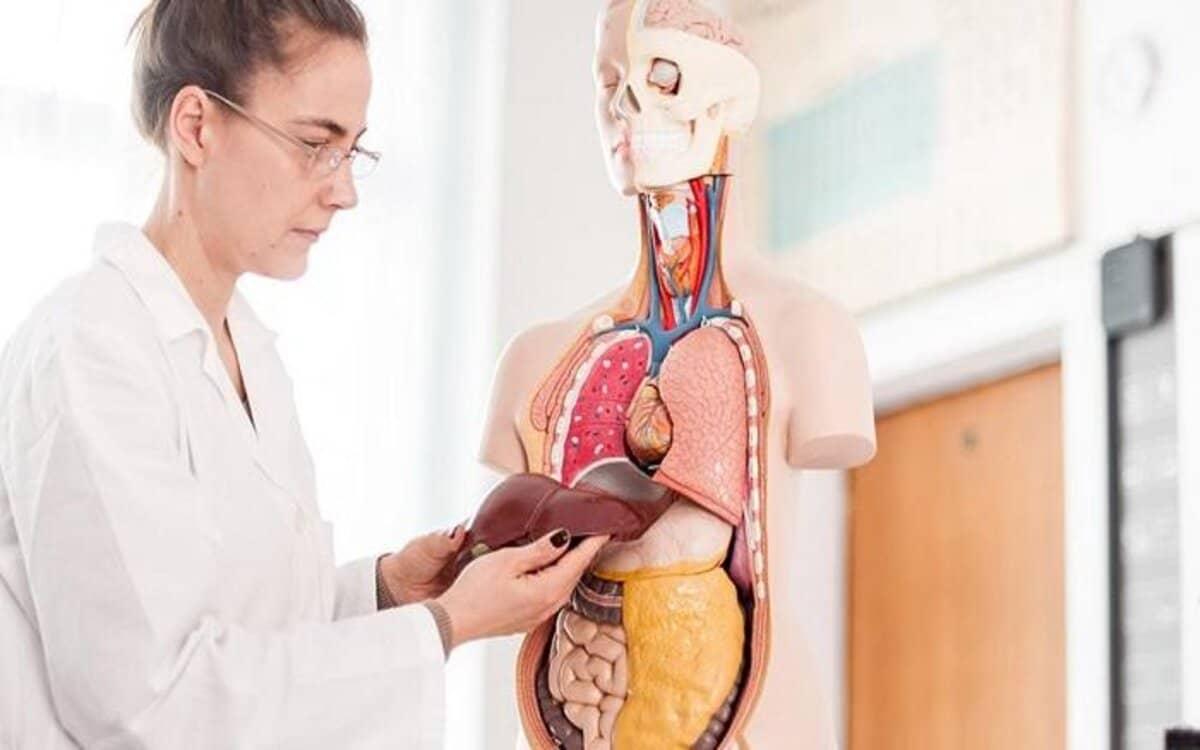 اسباب ارتفاع انزيمات الكبد alt ast