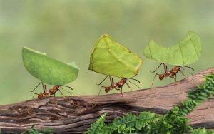 كيفية التخلص من النمل في الزرع