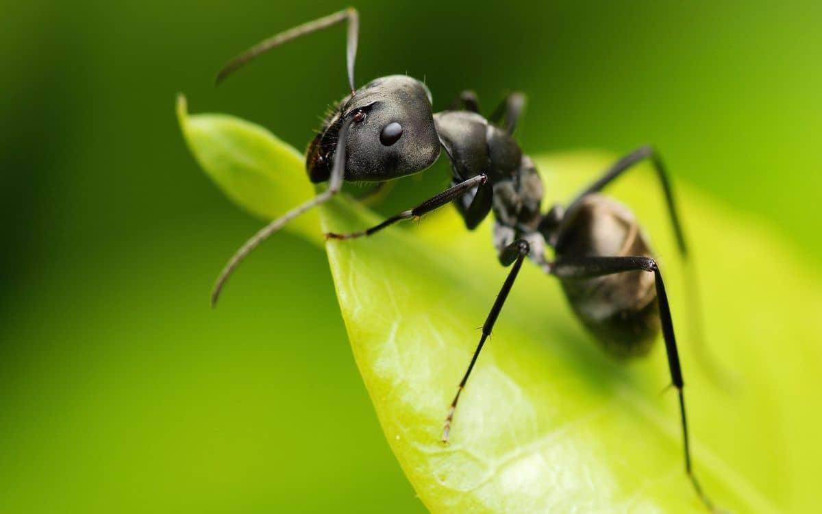 كيفية التخلص من النمل في الاشجار